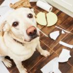 Conso-Assurances-animaux