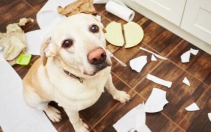 Animaux domestiques : quelles assurances souscrire ?